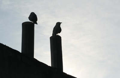 Godmorgon Malmö fåglar