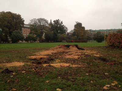 Rörsjöparken Fällda träd Stubbe 2